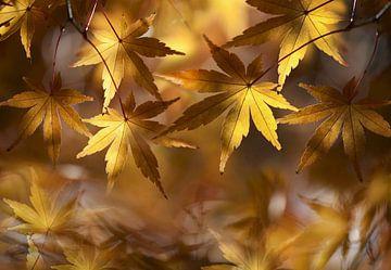 De herfst op zijn mooist