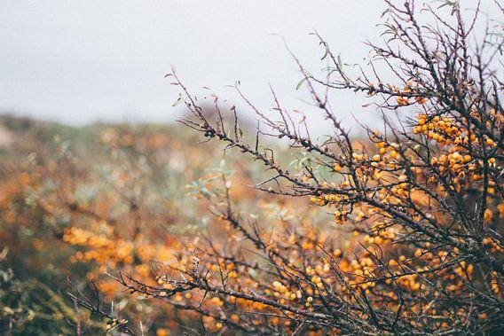 oranje natuur