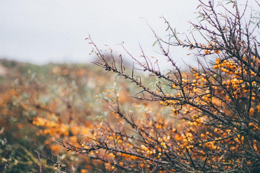 oranje natuur van Stephan de Haas