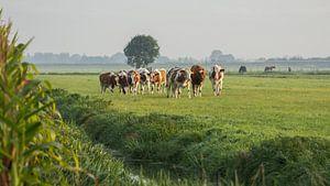 Enthousiaste koeien! van André Hamerpagt