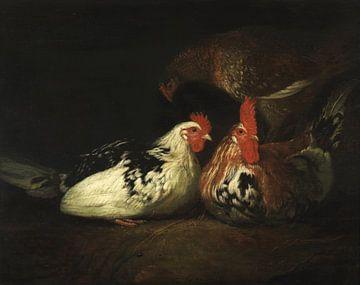 Hahn mit Hühnern, Jacob Gerritsz. Cuyp