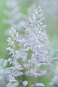Macro fotografie van gras in bloei van Ellen Driesse