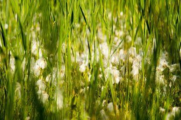 Bloemen in zomers grasveld van Marcel Alsemgeest