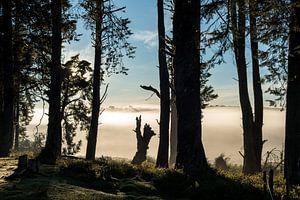 Bomen landschap in de mist in Sri Lanka in tegenlicht