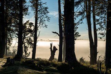 Bomen landschap in de mist in Sri Lanka in tegenlicht von Hein Fleuren