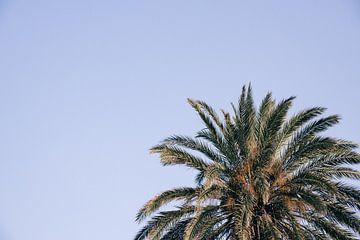 Gouden palm (horizontaal) van Daniel Houben