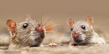 Die kleinen Ratten von Heiko Lehmann