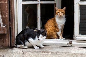 Deux chats à la fenêtre-Orléans