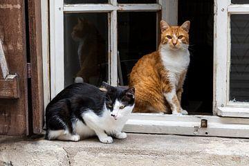 Twee katten in venster Orleans van