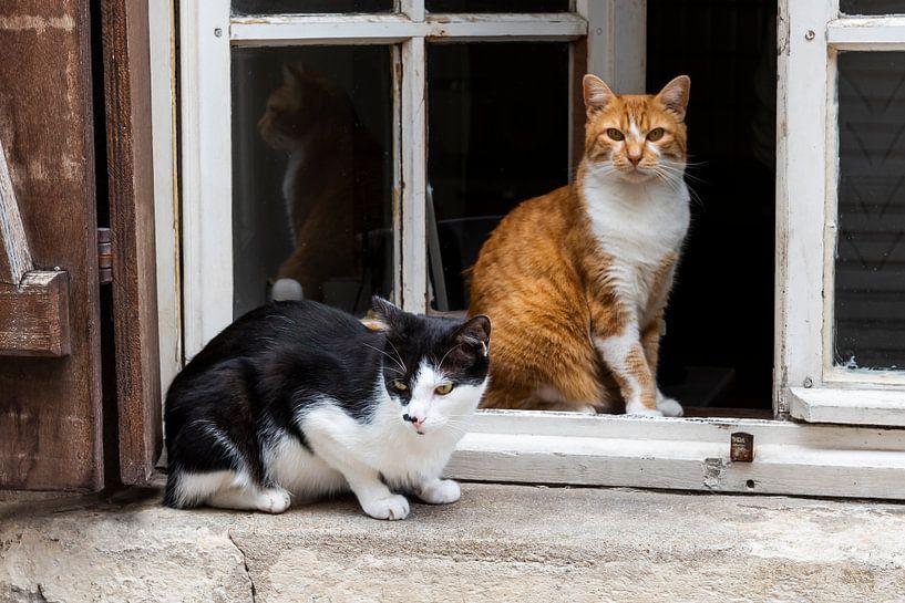 Deux chats à la fenêtre-Orléans sur Daan Kloeg