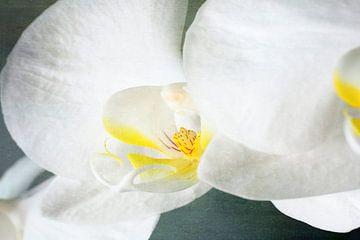 Orchidee von Markus Wegner