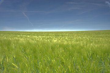 Getreide-Landschaft von Edzo Boven