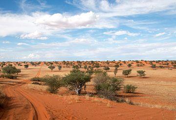 Straße durch die Kalahari-1 von Britta Kärcher