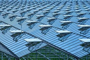 Oneindig glazen dek met ventilatieramen van een tuinbouwkas