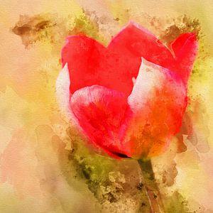 Tulp van de liefde van