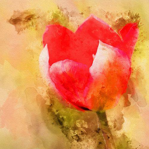 Tulp van de liefde