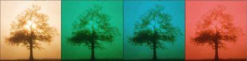 Eenzaam boom in vier jaargetijden van Maurice Dawson