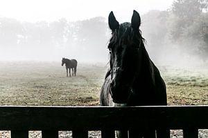 hello litte horse