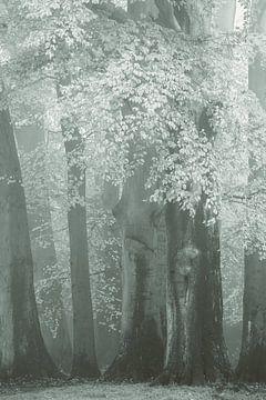 Het Gesluierde Bos van Lars van de Goor