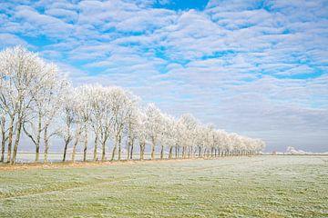 Winterlandschap in de IJsseldelta met berijpte bomen van