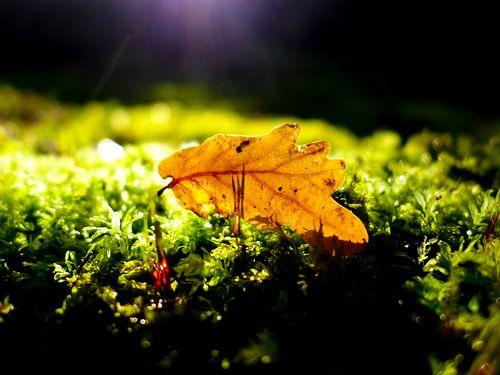 Spot on - De herfst is hier