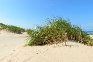 Duinen aan het strand tijdens een prachtige zomerdag van