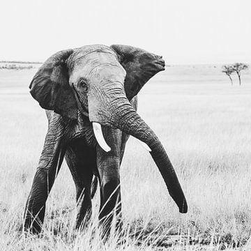Le showman - l'éléphant sur Sharing Wildlife