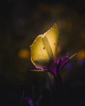 Gelbe Flügel Schönheit von Sandra Hazes