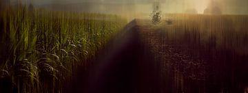 Limburger Landschaft Abstraktion #4 von Márton Gutmayer