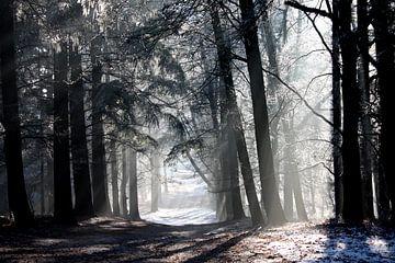 Winter van Manon Ruiter