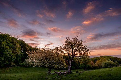 Sunrise Tree von Peter Oslanec
