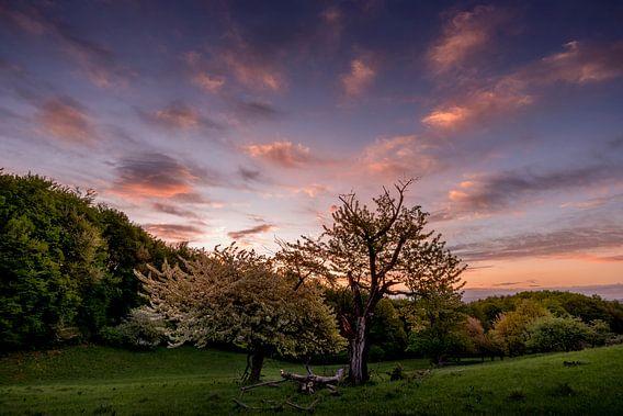 Sunrise Tree van Peter Oslanec