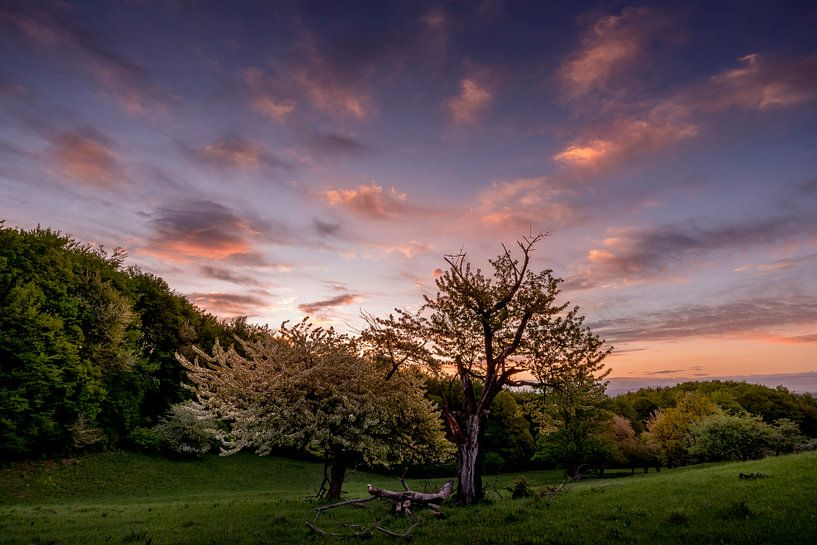 Sunrise Tree sur Peter Oslanec