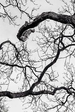 Baum von Myrthe Vlasveld