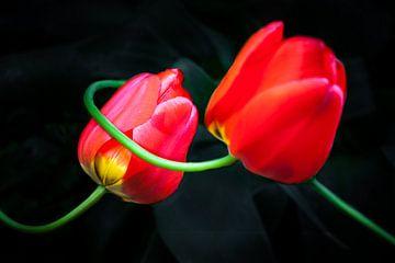 Rote Tulpen van Holger Debek