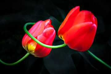 Rote Tulpen sur Holger Debek