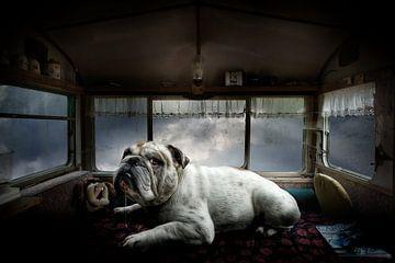 Lost Camping von Juliën van de Hoef