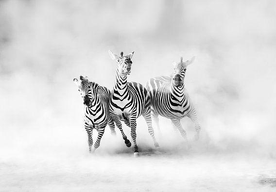 Zebra's, Juan Luis Duran