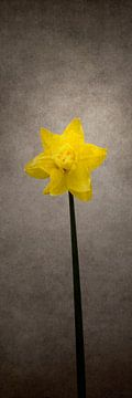 Frühjahrsblüher - Das Osterglöckchen | Vintage-Stil von Melanie Viola