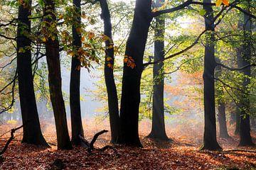 Silhouetten in de herfst in het bos van Dennis van de Water