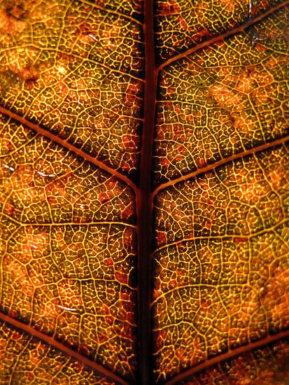 Glas in lood boomblad van Vectorific Design