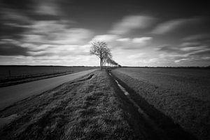 Weiland langs een landelijke weg