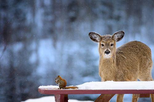 Un cerf et un écureuil