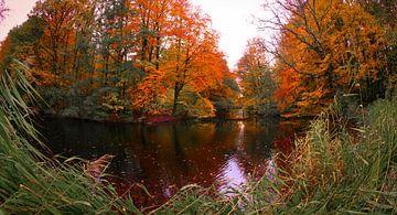 Knallende herfstkleuren van Peter Heins