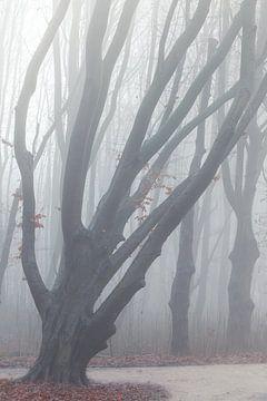 Boom in mist van Thijs Friederich