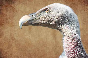 Portret van een vale gier van Fotografie Jeronimo