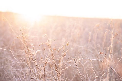 Zacht licht bij zonsopkomst | In het weiland