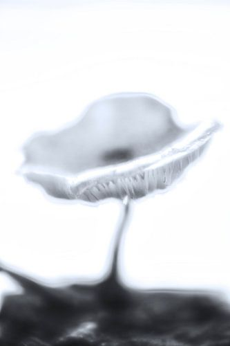 Blurred Mushroom sur