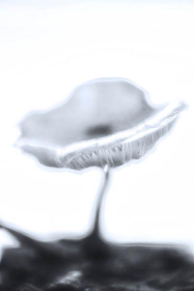 Vervaagde paddenstoel van Pieter van Roijen