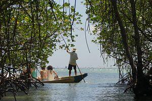 Rondvaart door mangrovebos in Indonesie van